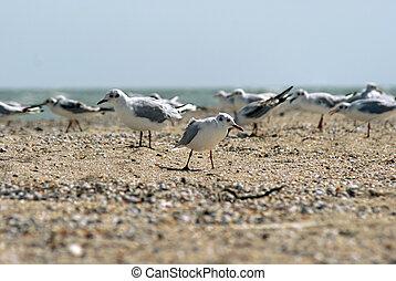 Seagull on the Azov beach in Berdyansk