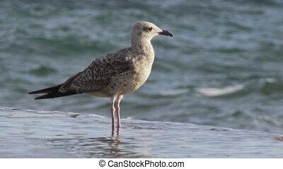 Seagull on the breakwater