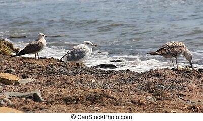 Seagull on the coast close