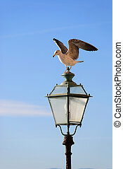 Seagull on the light