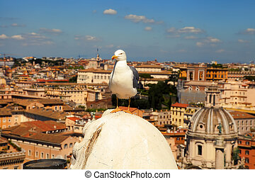 Seagull on the outlook above historical center of Rome. Seagull stands over the roofs of Roma. Seagull watching Rome in summer. Bird on rooftops in the historic city center.