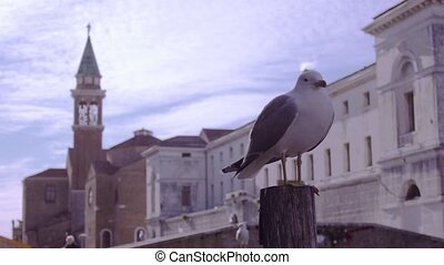 Seagull on the pole with a tower behind it