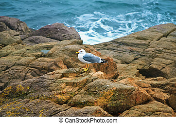 Seagull On The Rock In Front Of The Black Sea