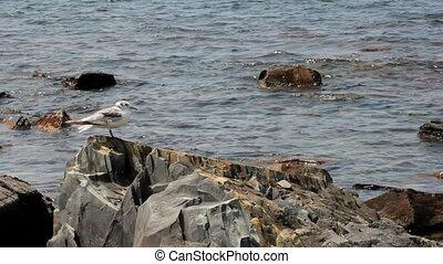 Seagull on the rocks. Seascape