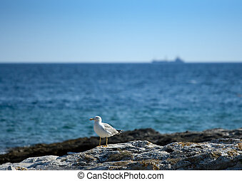 Seagull on the rocky beach