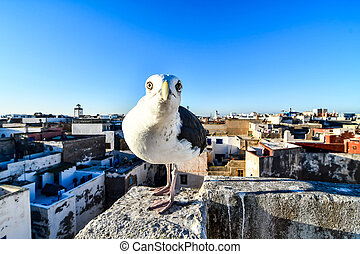 seagull on the roof, photo as background
