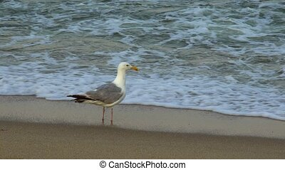 Seagull on the shore of the ocean
