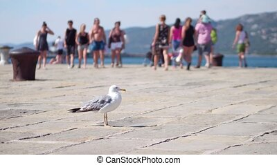 Seagull on the windy pier