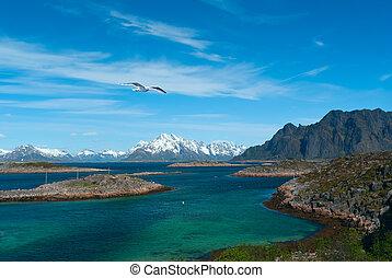 Seagull over sea near norwegian island Skrova