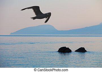seagull over the Black Sea at sunrise
