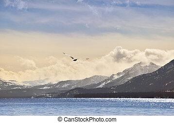 Seagull overt Tahoe