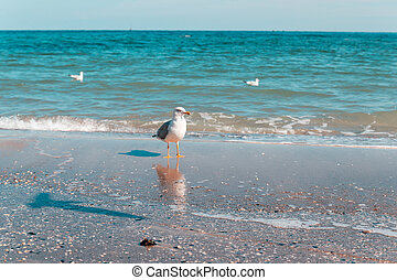 Seagull portrait against seashore and looking at the camera on a sunny day.