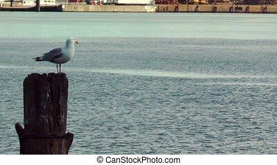 Seagull resting on wooden pillar