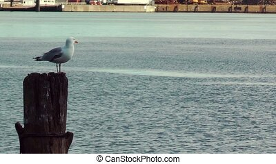 Seagull resting on wooden pillar at Kiel Canal, Germany