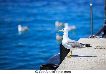 seagull running on the shore