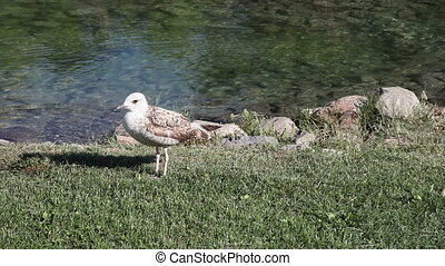 seagull, shooting Canon 5D MarkII