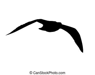 Seagull Silhouette isolated on a white background.