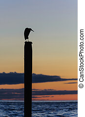 seagull silhouette resting on a post at sunset