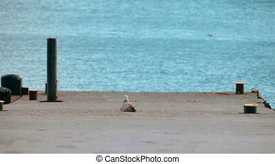 seagull sits on pier