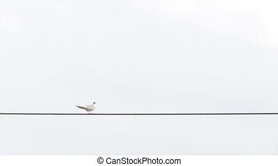 Seagull sits on the wire