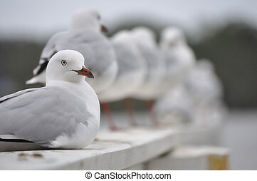 Seagull sitting in foreground