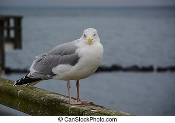 seagull sitting on a balustrade