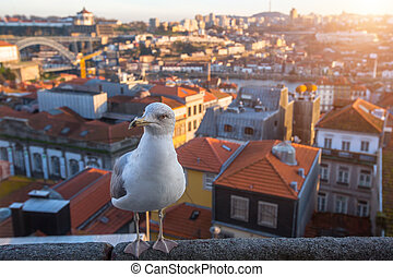 Seagull sitting on a blurred background of old Porto downtown, Portugal.