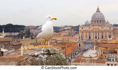 Seagull sitting on a old pillar against vatican view