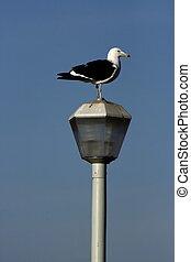 Seagull sitting on a pole