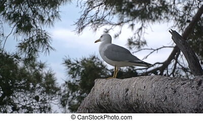 Seagull sitting on a tree