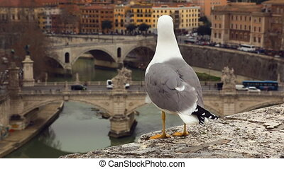 Seagull sitting on barrier wall against Rome view