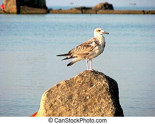 Seagull sitting on rock in sea