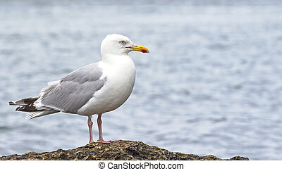 Seagull sitting on rock