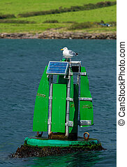 Seagull Sitting on Solar Buoy