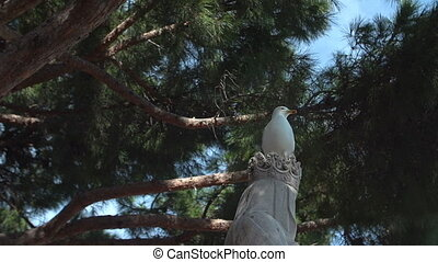 Seagull sitting on statue head in Cannes, Cote d'Azur,...