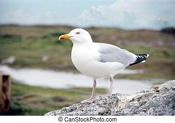 seagull sitting on stone