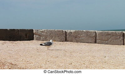Seagull sitting on the beach of the sea coast