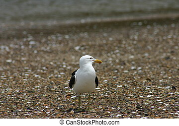 Seagull sitting on the beach
