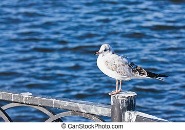 seagull sitting on the fence