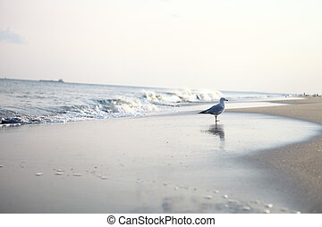 Seagull sitting on the ocean