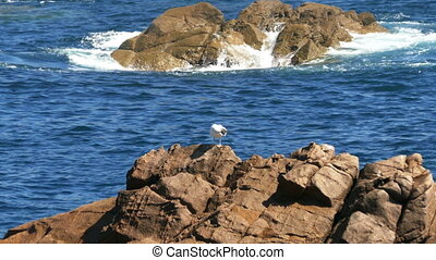 Seagull Sitting on the Rocks, backg