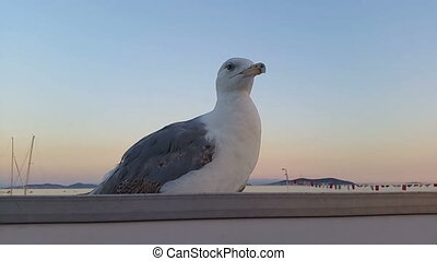 Seagull Sitting on the Roof Near the Sea