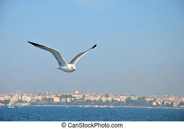 Seagull soaring in breeze - A seagull soars in the sky with...