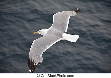Seagull soaring over the blue ocean surface