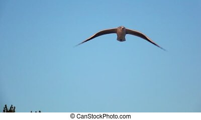 Seagull soars into the blue sky and hovers in the open space. Slow motion