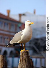 Seagull Standing And Watching