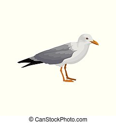 Seagull standing, gray and white sea bird, side view vector...