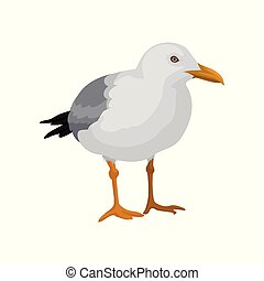 Seagull standing, gray and white sea bird vector...