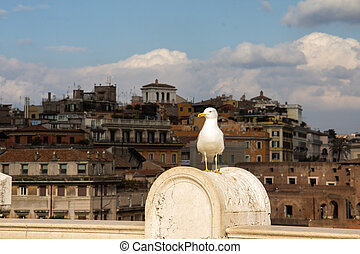 seagull standing in front of Rome