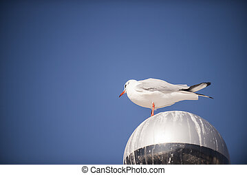 Seagull standing on a drity street lamp